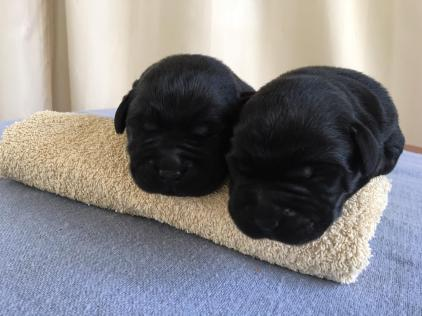 puppy zoe1